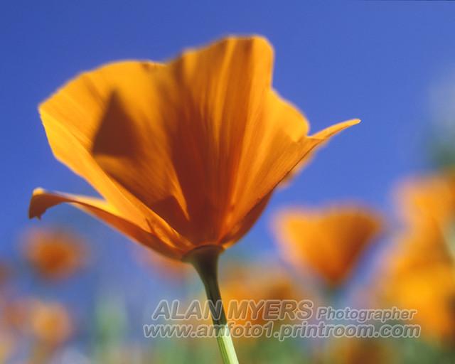 IMAGE: http://farm6.staticflickr.com/5023/5601543420_61d786650e_z.jpg