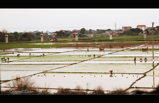 The most busy day in paddy field