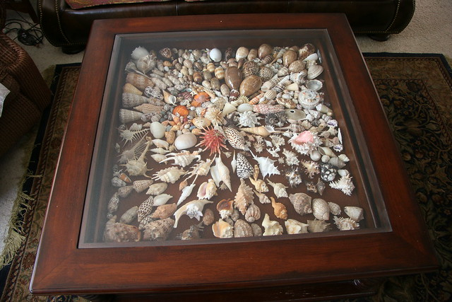 Shells under glass coffee table flickr photo sharing for Ideas for displaying seashells