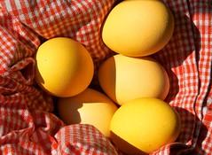 yellow, food, easter egg, egg,
