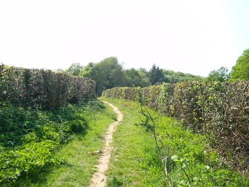 Between hedges
