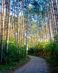 Scenic Beauty / Four Seasons (Craig Burlingame)
