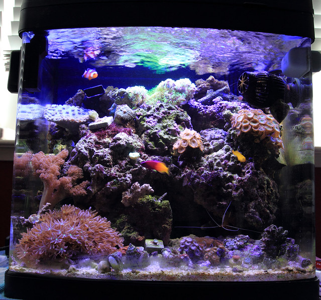 Dans biocube 14 build the reef tank for Starting a saltwater fish tank