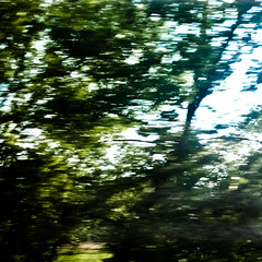 Moving Through Trees 001