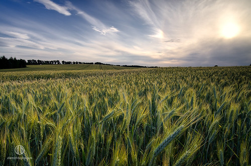 summer field juni germany landscape deutschland evening stack lee filters brandenburg dietrichbojko d7000 dietrichbojkophotographie 9gndsoft 6gndsoft