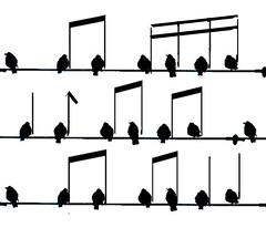 songbirds  ;-)