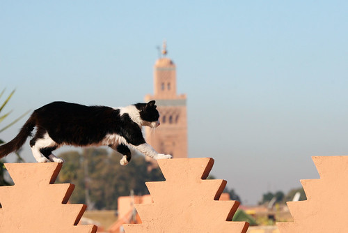 cat and mosque