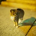 Leica Noctilux-M 50mm f/0.95 ASPH Test Shots by DigitalRev
