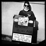 Some Think Walker Would Sell Strays to Research for a Buck Apiece