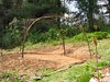 Grape Arbor of Rebar