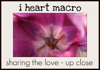 http://www.shinethedivinecreativityisaspiritualpractice.com/2014/07/i-heart-macro-63.html