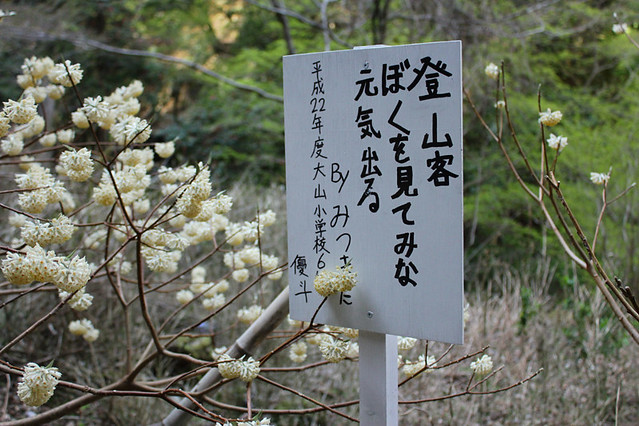 20110417_大山_0036