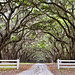 Wormsloe Plantation - Coolest driveway in the world (Spanish moss and Oak trees)