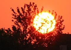 sunlight, sun, sunset,