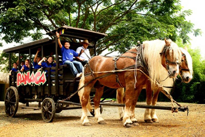 Imagen de carruajes tirados a caballo en PANACA - Los 10 mejores lugares turísticos del departamento del Quindio