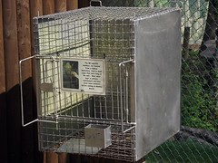 outdoor structure(0.0), dog crate(0.0), cage(1.0), animal shelter(1.0),