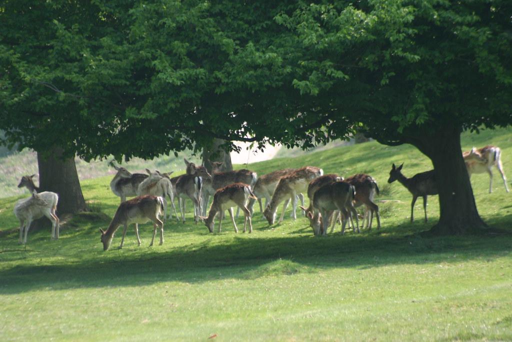 Deer under trees