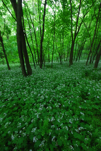 Header of A Forest Within a Forest