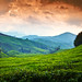 Cameron Highlands by Jim Boud