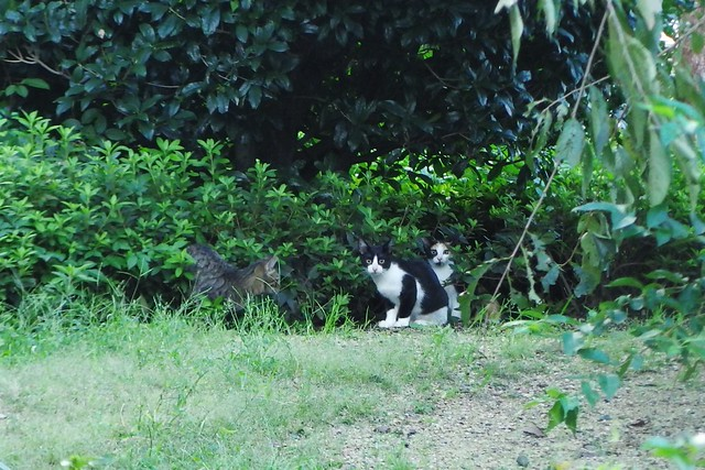 Today's Cat@2016-10-06