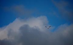 Dark Clouds With Bird in Sky