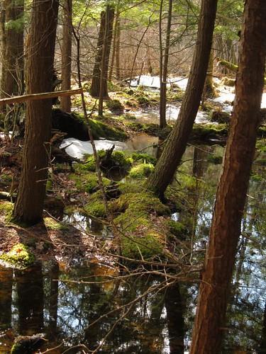 trees tree green water moss swamp bog mossy