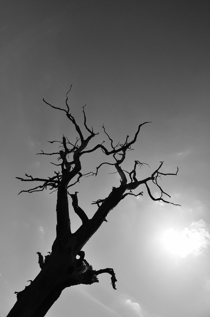 Tree Tring Circular