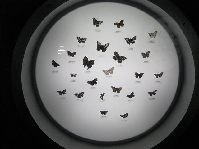 蝴蝶、昆虫类 (5)