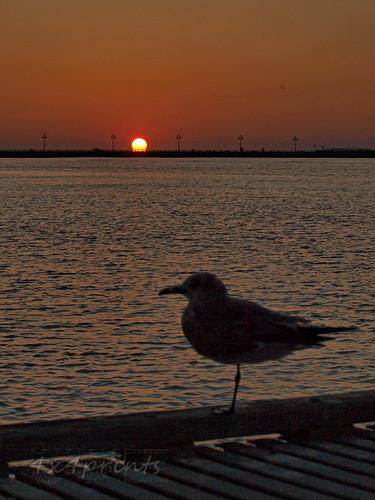 sunrise palms dawn gull keywest