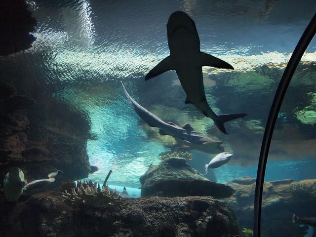 Image Result For Aquarium At Mandalay