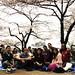 Sakura house Hanami 東京 日本。Tokyo Japan Sakura by Ari Helminen