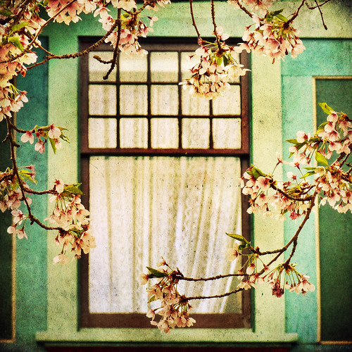 vacation canada window landscape bc blossoms vancouverisland cherryblossoms tranquil fairfield victoriabc travelphotography trutchstreet idream zedzap