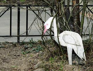 (112/365) Egret