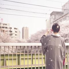Sakura Snap!!