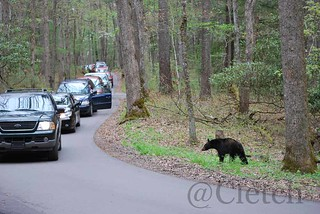 Saw a Bear!