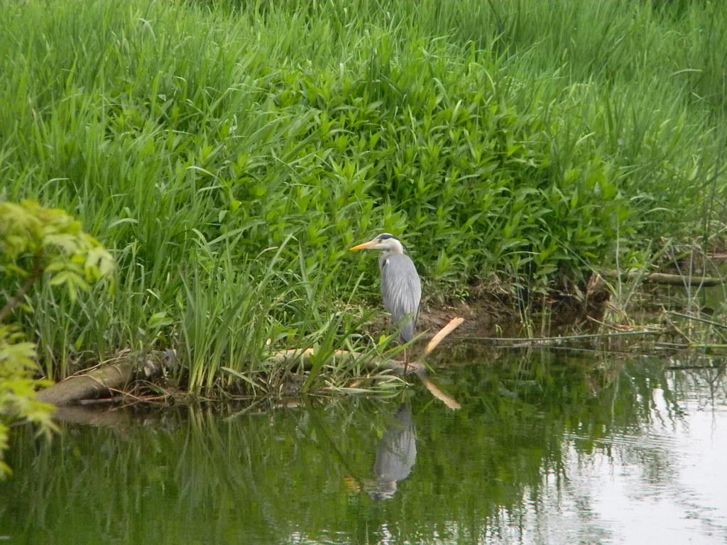 Heron Huntingdon Circular