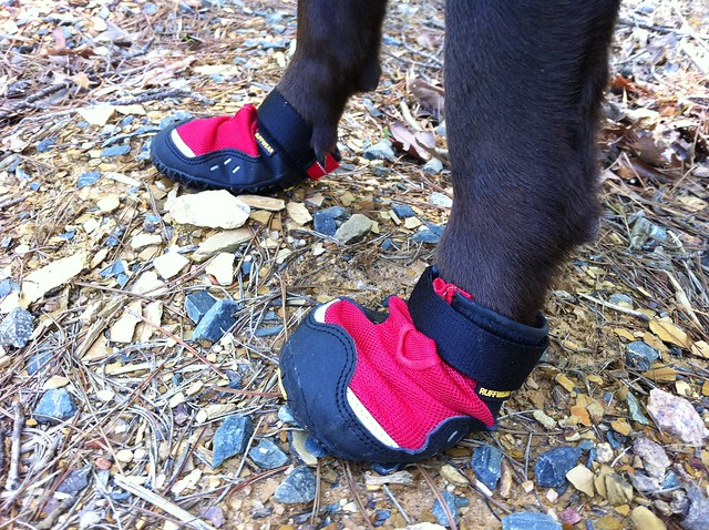 Hiking with your dog - footwear