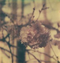 last blossoms