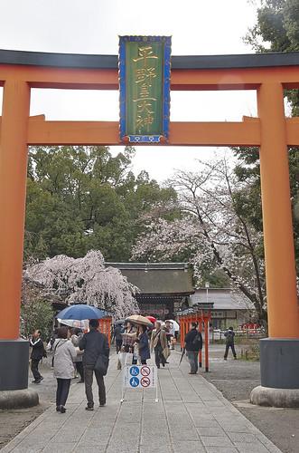 【写真】2014 桜 : 平野神社/2020-06-29/IMGP5564