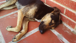 Stray Dog Sleeping #4