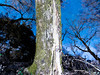 The tree bridge by joshi09