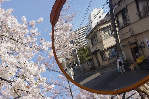 osanpo/お散歩