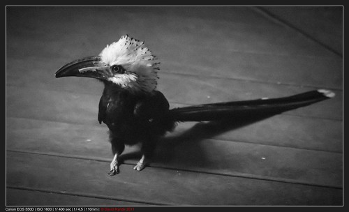 Cool looking bird at the Central Park Zoo - New York