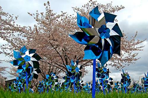 flower tree oregon cherry child april sakura salem pinwheel awareness viewing hanami abuse 風車 d40 kazaguruma edmundgarman