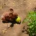 Teporingo reclama su mango por xun reborn