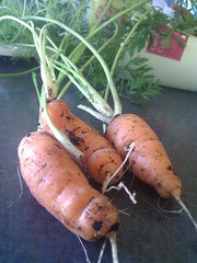 Homemade Carrots