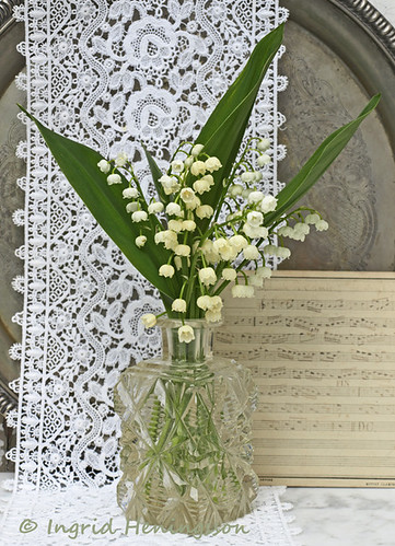 Lily-of-the-Valley, Lace and Music