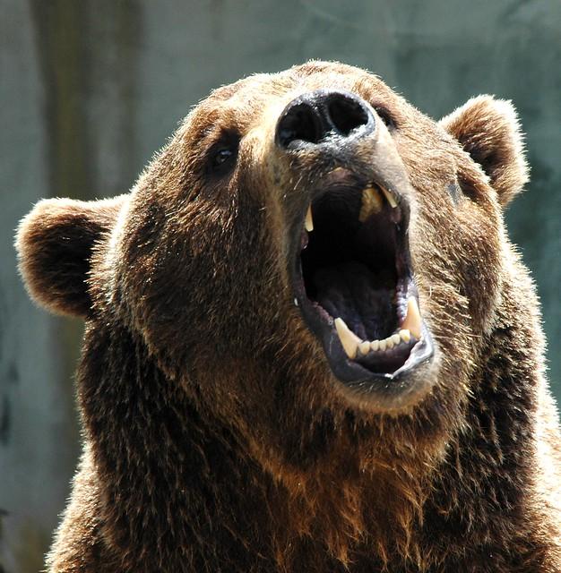 Grizzly film  Wikipedia