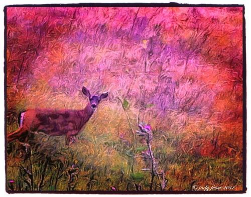 animal landscape deer grasses iphoneart