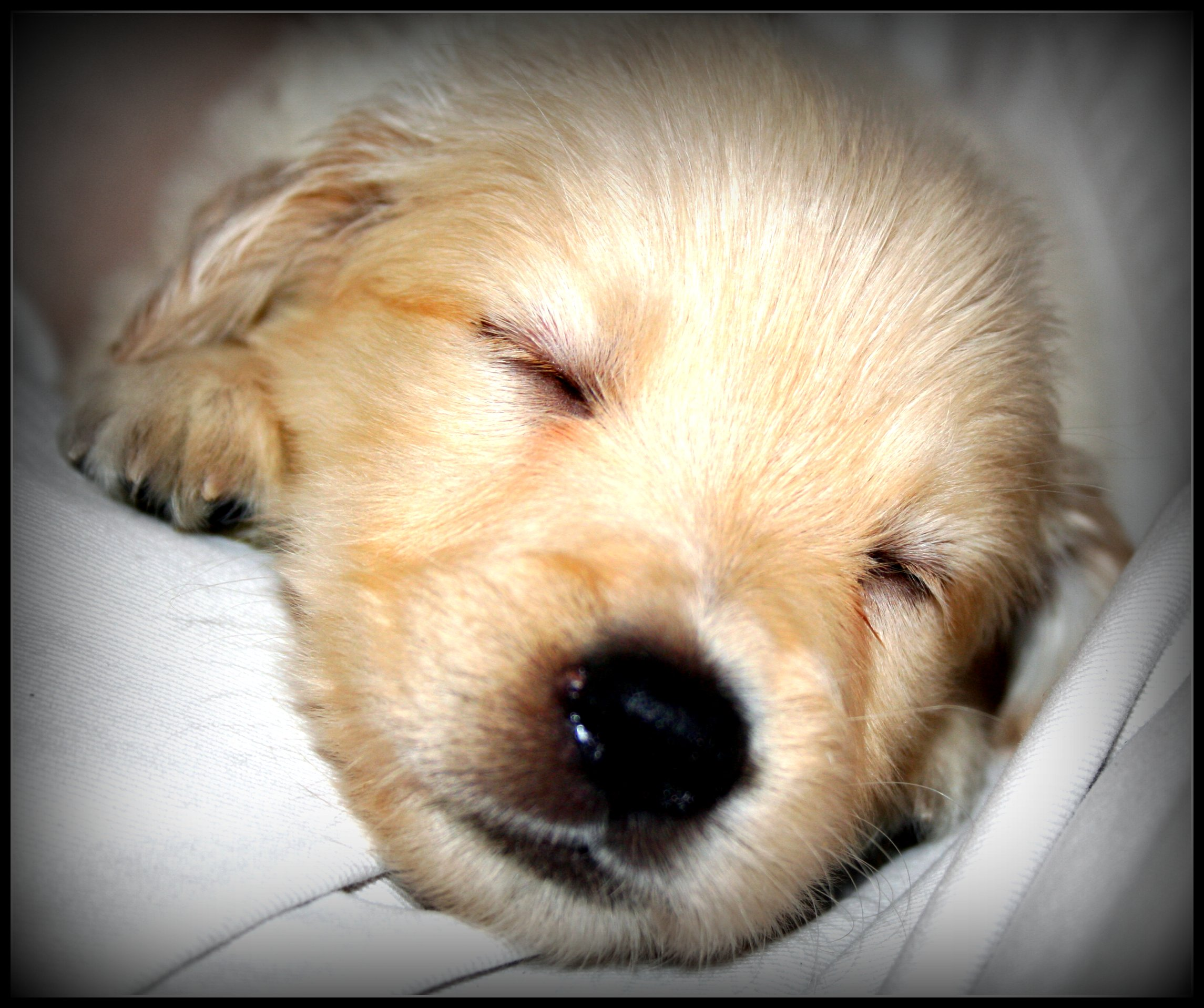 Galleries Related: Sweet Dreams Funny , Good Night Sweet Dreams ,